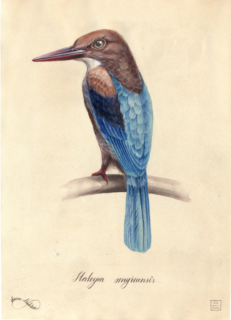 Kingfisher_780