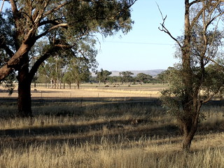 Central-NSW-pastoral-rural-scenery
