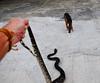 ,, 12 Foot Python ,,