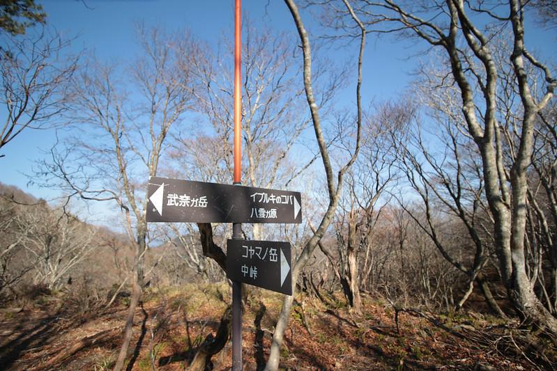 20141122-武奈ヶ岳&京都ライトアップ-0338.jpg
