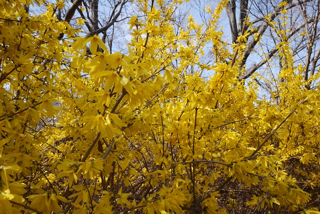 土, 2016-03-26 14:33 - Brooklyn Botanic Garden