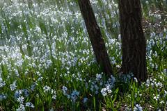 Flower spread