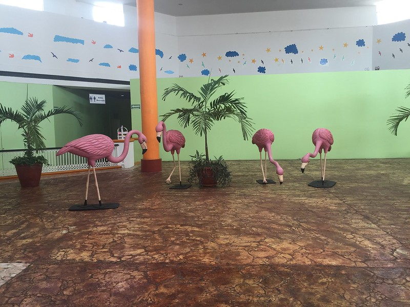 Plaza Flamingos