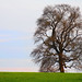The proverbial lone tree - early spring (On Explore 4/12/2016) by die Augen
