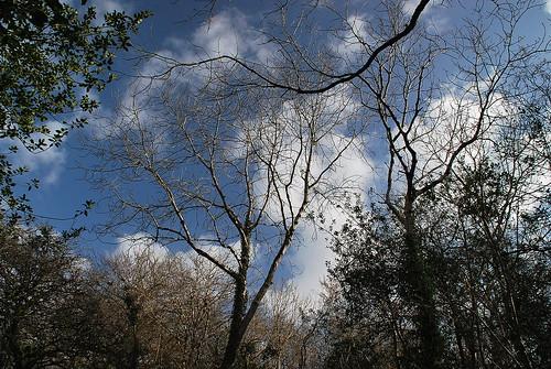 millenniumforest_053