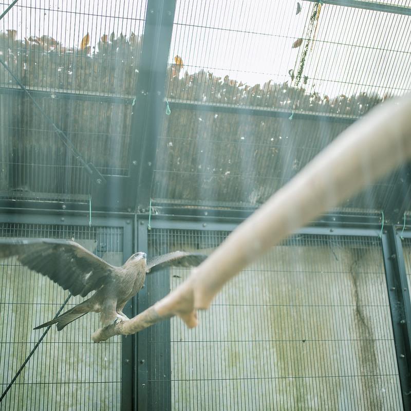 夢見が崎動物公園