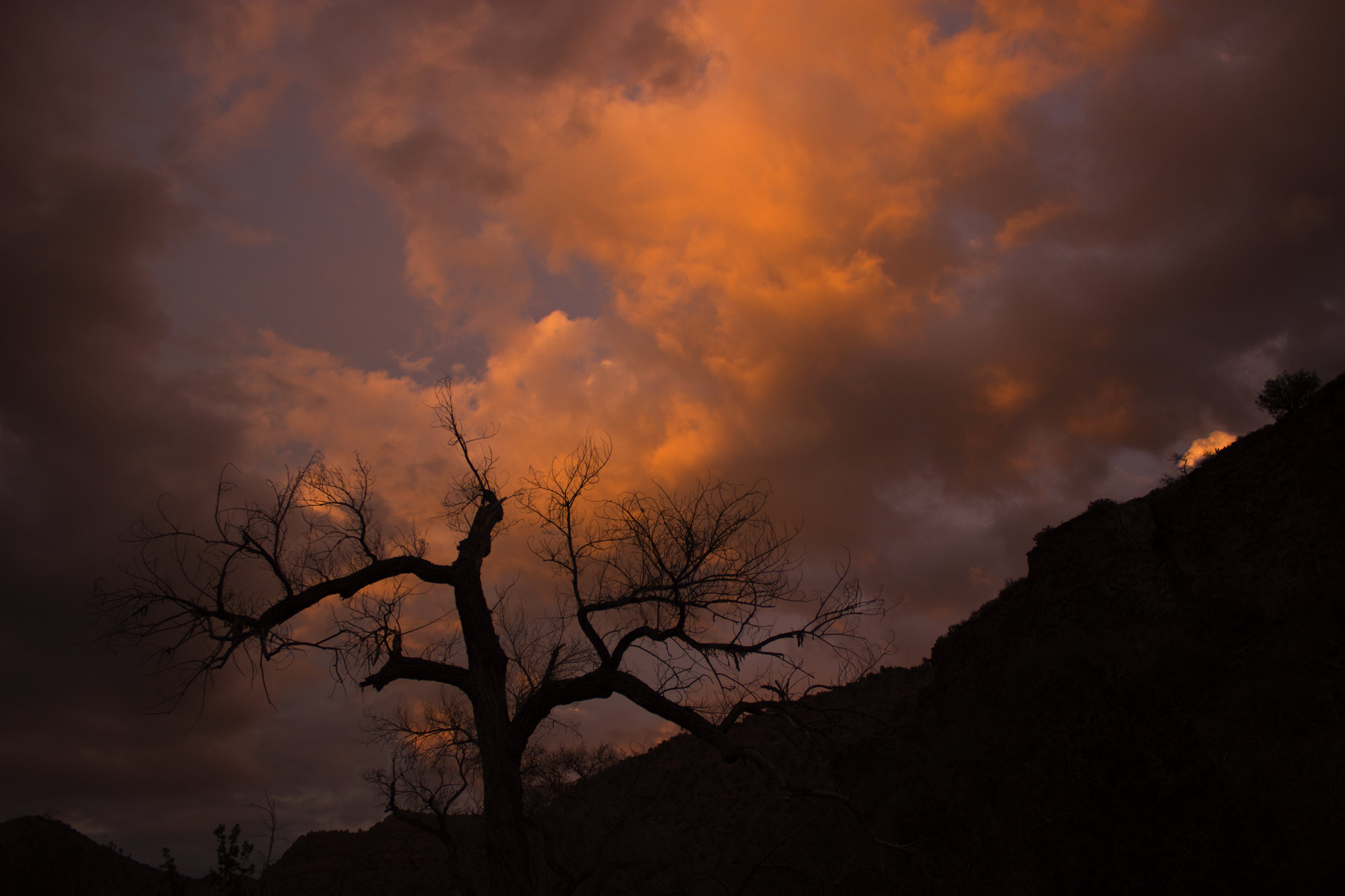 Sycamore Canyon Sunsets
