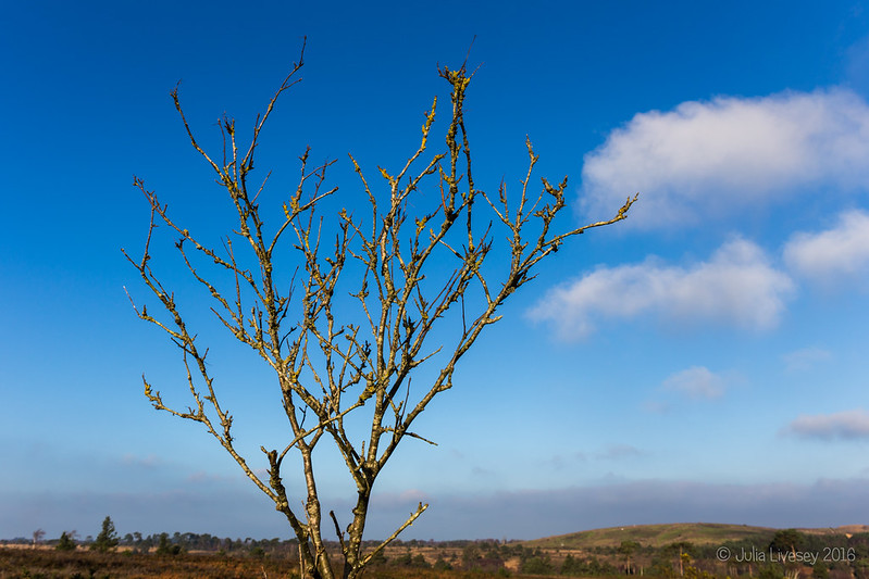 Lichen covered tree in the sunshine