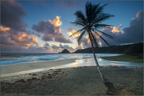 seascape beach coconut martinique caribbean marigot ansecharpentier