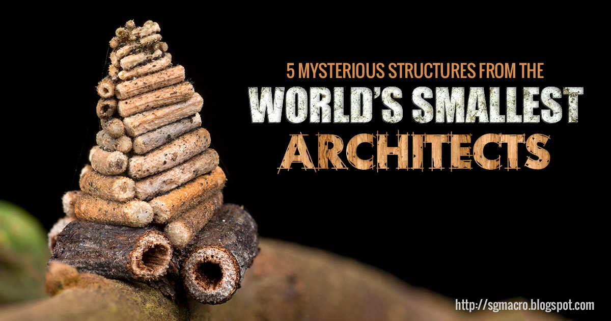 5 Mysterious Structures from the World's Smallest Architects