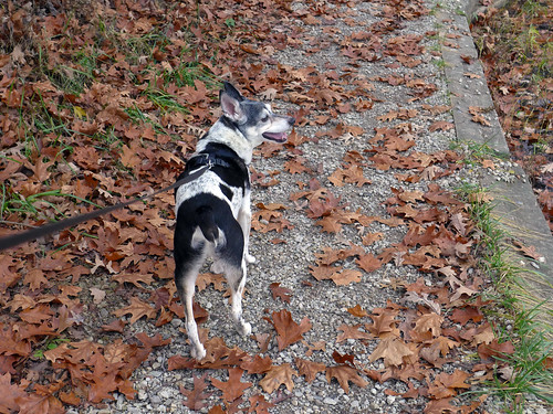 2015-11-04 - Walking at Wallace State Park - 0015 [flickr]