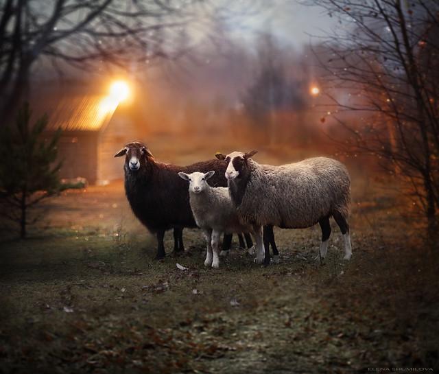 aleshurik - buddies in the mist..