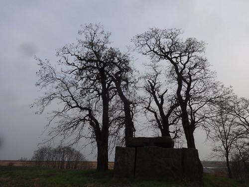 Gerbitz Großsteingrab Bierberg der Jungsteinzeit 3.500-2.800v.Ch. an L64 südlich 06429