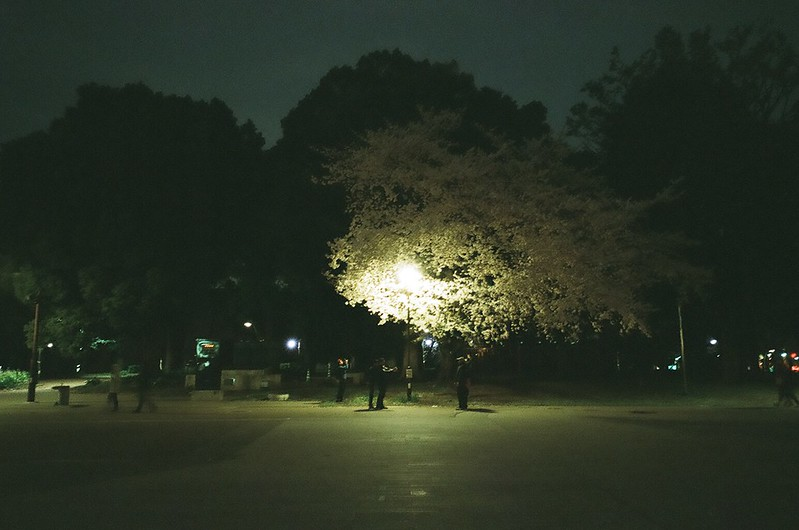 上野公園の夜桜 by RICOH GR1s 2016年4月4日