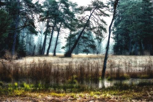The Sippenau moor before sunrise