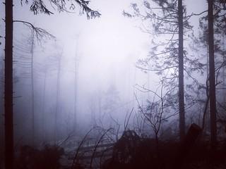 Lilaceous fog