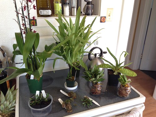 Portland Orchid Show purchases