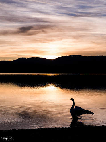 sunset france french lac ombre jura cygne doubs stpoint