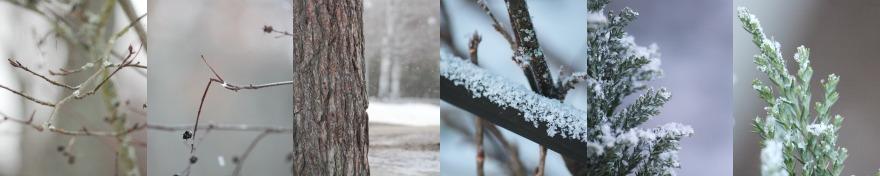 talvisia kuvia