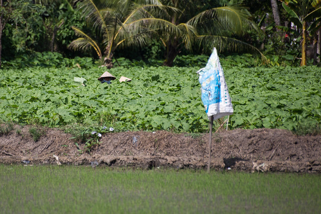 Southern Vietnamese Rice Paddies