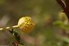زهرة السدر beautiful flower
