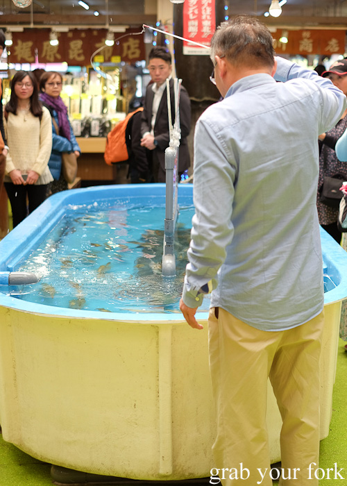 Tub with live squid at Hakodate Morning Market, Japan