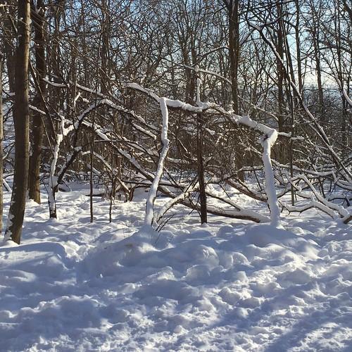 Snow Lining