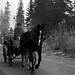 <p><a href=&quot;http://www.flickr.com/people/93892755@N02/&quot;>kaprysnamorela</a> posted a photo:</p>&#xA;&#xA;<p><a href=&quot;http://www.flickr.com/photos/93892755@N02/24298876253/&quot; title=&quot;Black Horse&quot;><img src=&quot;http://farm2.staticflickr.com/1565/24298876253_ff11270191_m.jpg&quot; width=&quot;240&quot; height=&quot;160&quot; alt=&quot;Black Horse&quot; /></a></p>&#xA;&#xA;