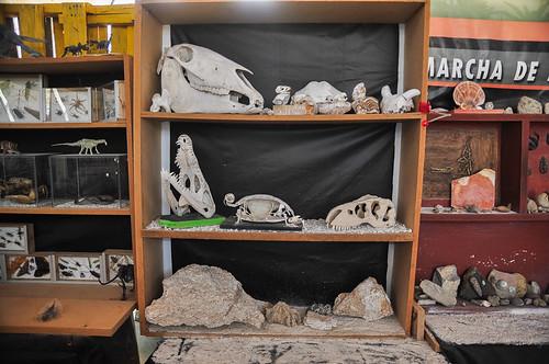 Paleoparque Las Ventas 2015 (17)