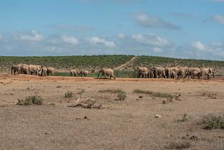 Elefanten am Hapoor Dam