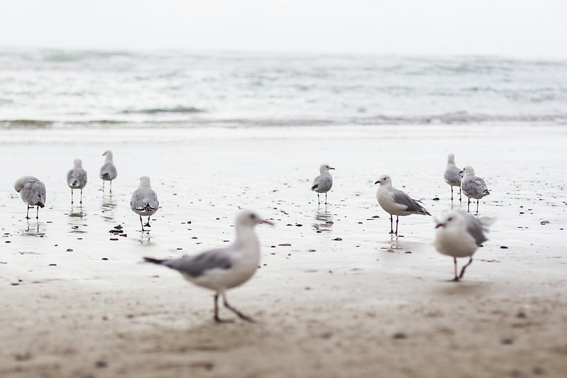 seagulls at the sea shore