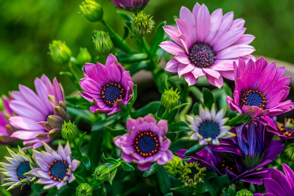 Hypnotic bloom