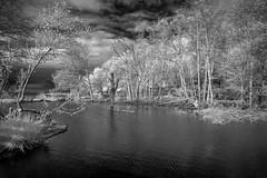 03-22-2016 IR Pond at Golden Garde