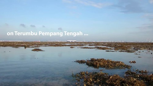 Seagrasses doing well at Terumbu Pempang Tengah