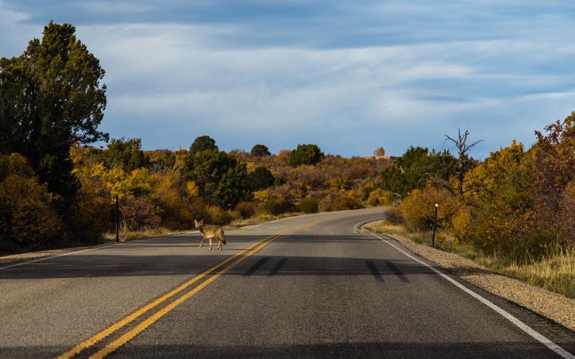 Mesa Verde-7220