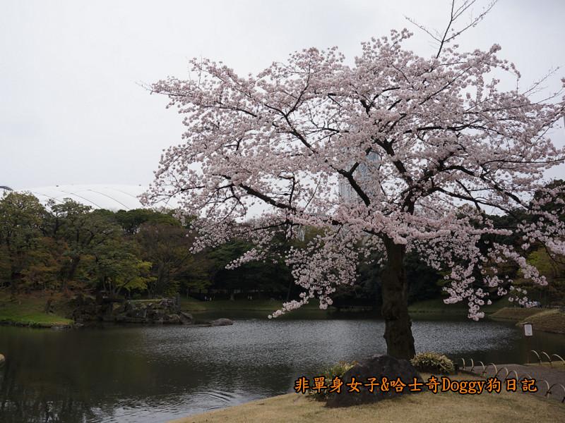 日本自由行小石川後樂園&東京巨蛋城09