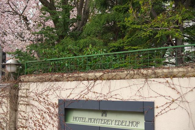 2016428のホテルモントレエーデルホフ札幌の桜_07