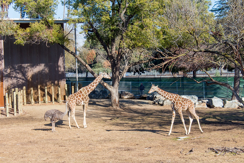 12.27. Fresno Zoo