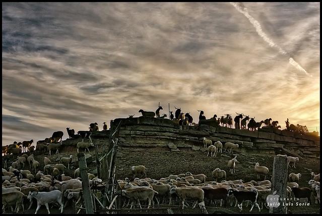 Julio L.Soria - El rebau00f1o / The herd