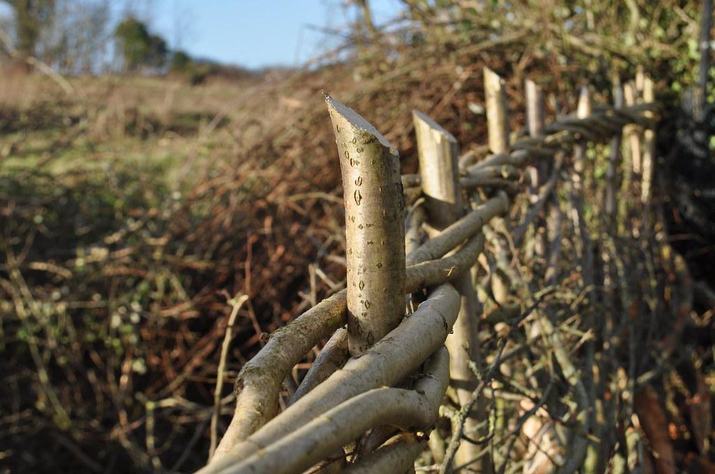 Hedgelaying Binding