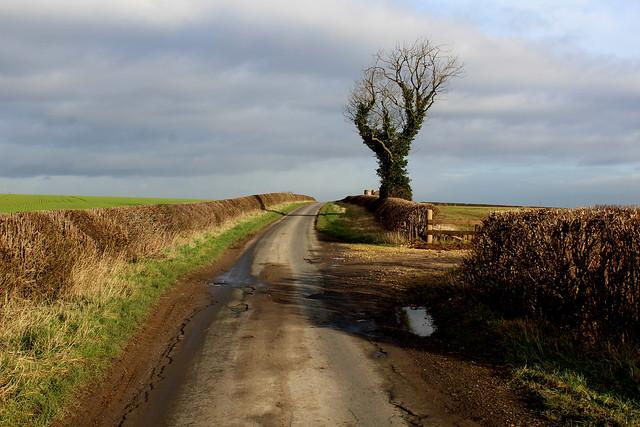 Jewitt Lane