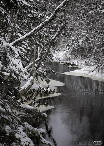 winter snow novascotia ducks brook