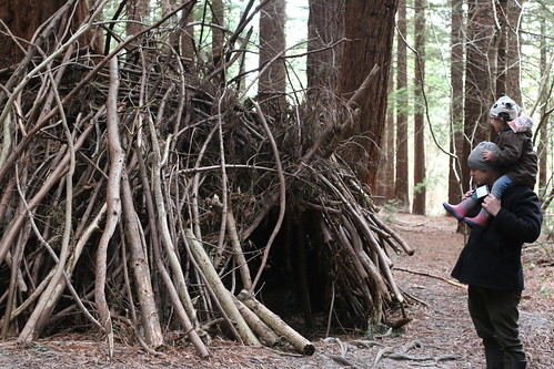 Redwood Grove den