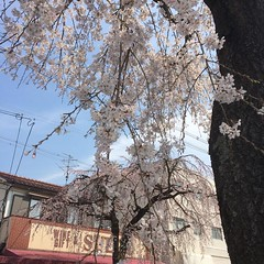 on the way to the market❤︎  #minoo #osaka #cherryblossom #桜 #箕面 #大阪 #latergram #nofilter