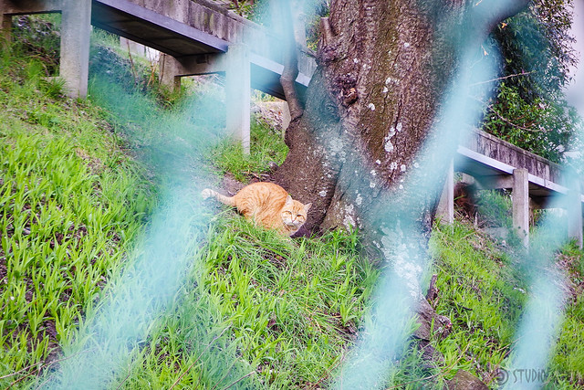 Today's Cat@2016-04-07