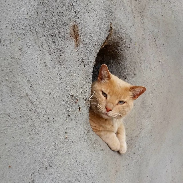 cat in wall./></p> </div><!-- .entry-content -->  <footer class=