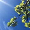 #trieste #vineyard #bluesky #sunny #sky