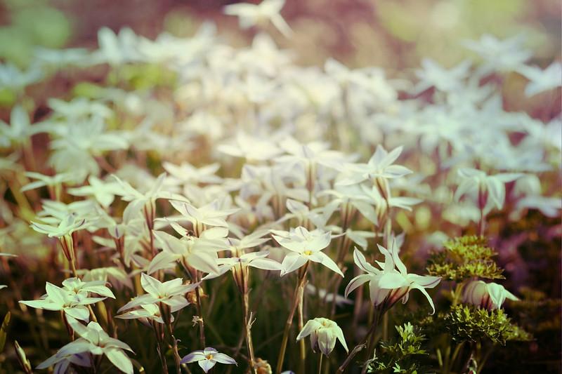 blur-dreamy-texture-texturepalace-35
