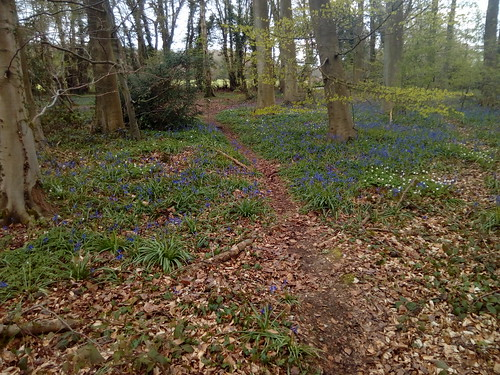 Bluebells and anenomes