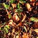Snart ikke flere visne blade men kun grønne. #forår #grønneblade #delditkbh #greenshoots #deldinby #forårsgrøn #bøgehæk #bøgeblade #lovecph #copenhagenlove
